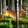 deer shooter